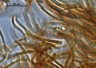 Expertise sur l'origine de la corrosion de tubes d'échangeurs de chaleur en acier au carbone alimentés par de l'eau de nappe